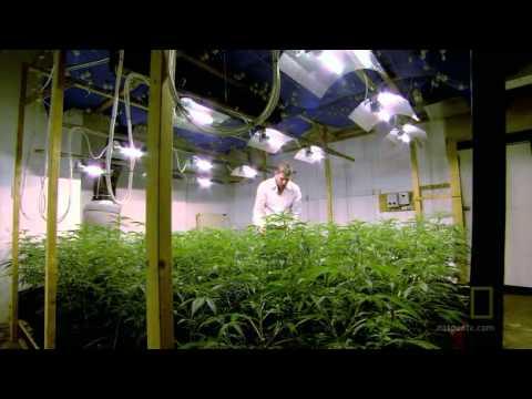 DRUGS, INC. Marijuana