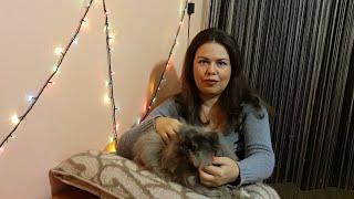 Кастрация, стерилизация котов и кошек. Контрасекс. Что делать с половозрелым пушистиком? Мой опыт