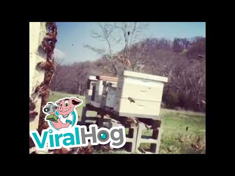 Thumbnail: Honey Bees in Slow Motion