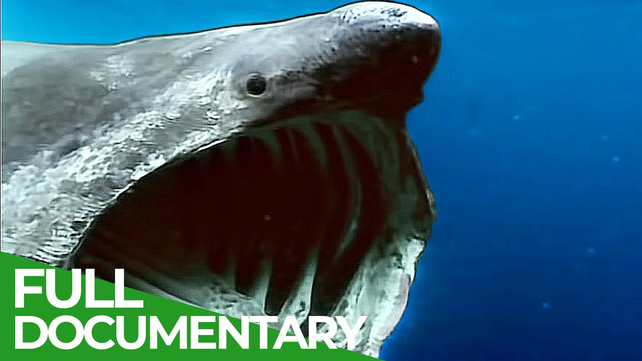Phantoms of Evolution - The Unknown Underwater Predators | Free Documentary Nature