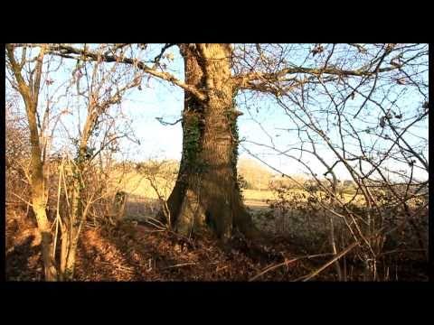 West Weald Landscape Project
