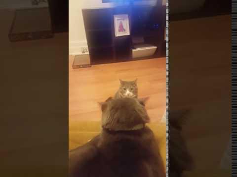 Brutal Cat Attack 2017