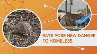 Why rats at Charlotte's tent city are a public health threat