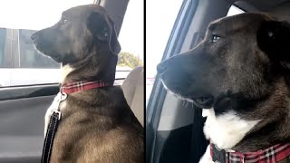 Dogs reaction when they realize they're going to the vet