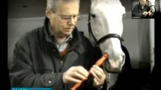 Приколы с лошадьми - подборка смешных ситуаций с лошадьми - Funniest Horse Videos