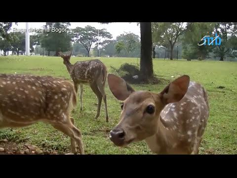 Anak anak senang banget Lihat Rusa di Istana Bogor