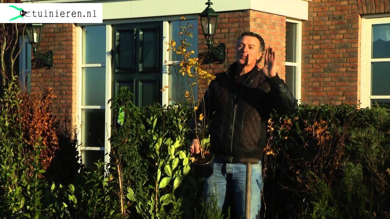 Tuin Hagen Soorten : Soorten hagen welke plant kies ik voor een haag tuinieren