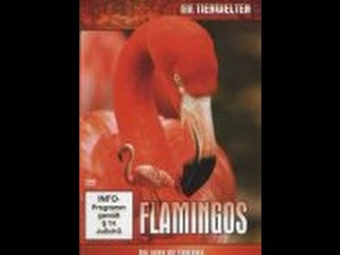 Faszination Flamingos