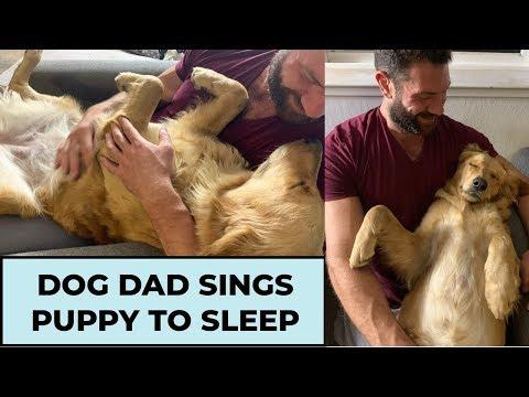 Dog Dad Sings Golden Retriever Puppy to Sleep
