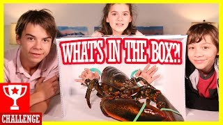 WHAT'S IN THE BOX CHALLENGE! WITH LIVE ANIMALS!  |  KITTIESMAMA