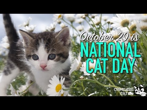 😺 October 29 - National Cat Day 😺