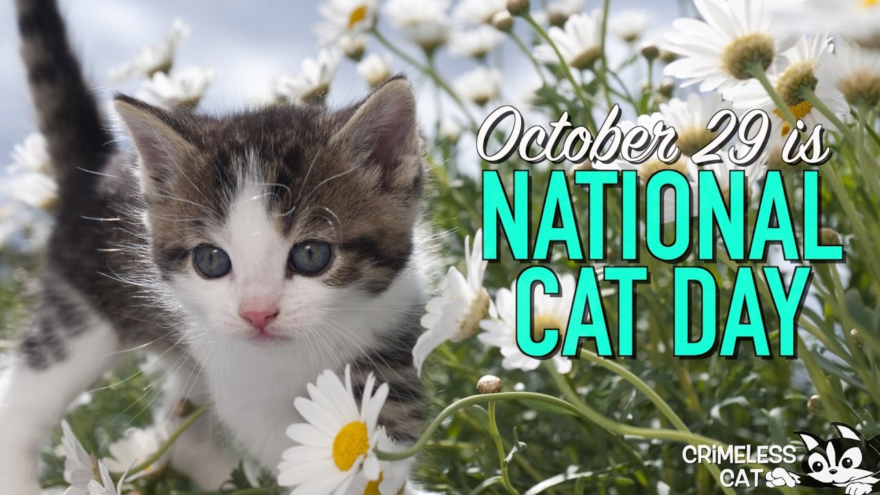 October 29 National Cat Day Youtube