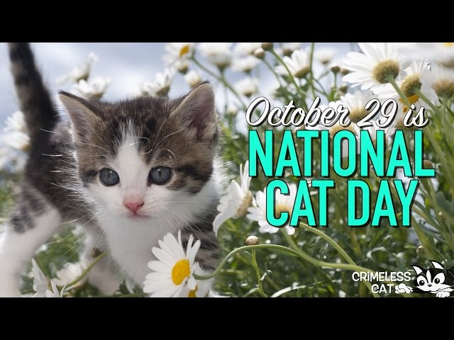 October 29 National Cat Day Free National Cat Day Ecards 123 Greetings