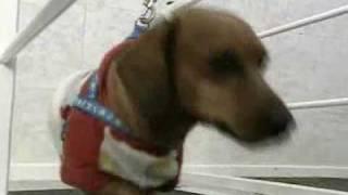 Vitalvet - Saiba quando recorrer à fisioterapia para o seu bichinho Vídeos RBS TV RS