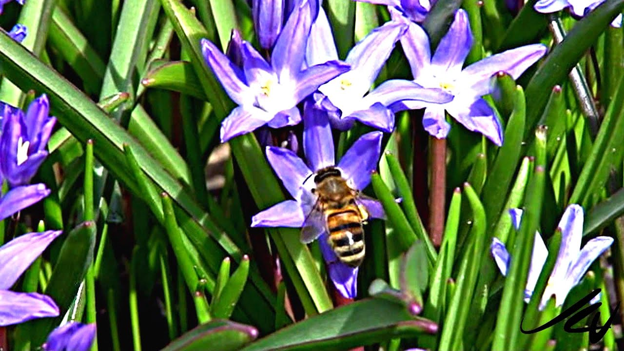 Early Spring Flowers And Bees In Slow Motion Youtube Youtube