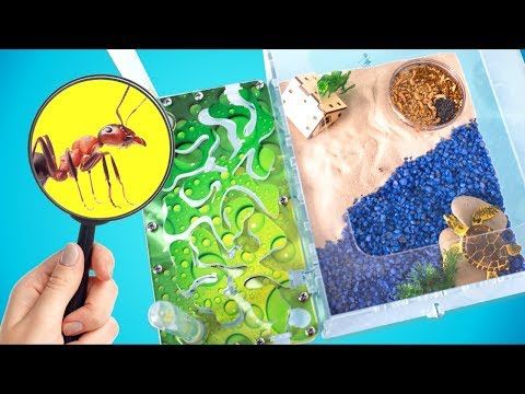 Ant Farm in Nautical Style | DIY | What Do Ants Do When Nobody Sees?