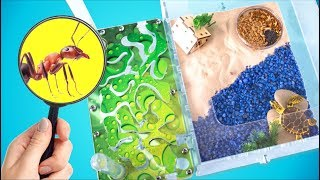 Download 5 Tips to Make Your Ants Happy | Building a New Ant Farm! Mp3 and Videos