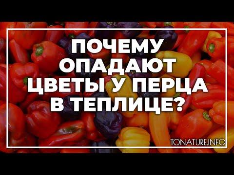 Почему опадают цветы у перца в теплице? | toNature.Info | черенковани | садоводство | размножение | выращивание | огородные | комнатные | растения | растений | культуры | tonatureinfo