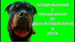 ДВА РОТВЕЙЛЕРА И КОТ ПОЗДРАВЛЯЮТ ЛАРОЧКУ С 8 МАРТА.воспитание и дрессировка собак