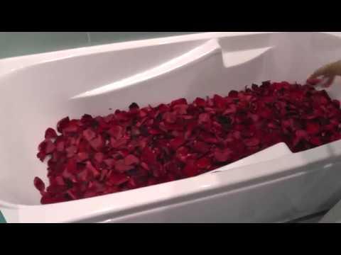 Душистая плетистая роза Compassion