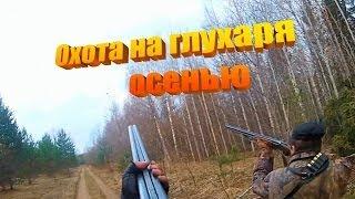 Охота на глухаря осенью! Охота осенью в Вологде! Глухарь.