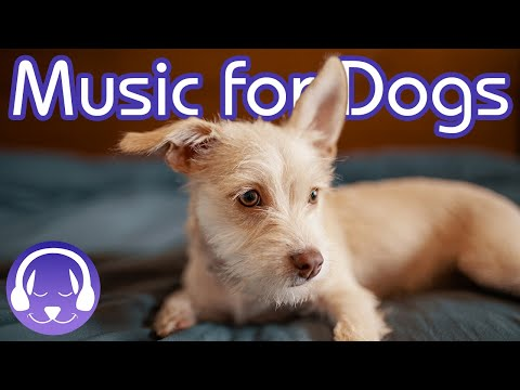 15-hours-of-soothing-music-for-dogs!-instantly-calm-your-dog-(2019!)