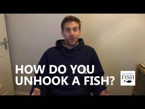 How Do I Unhook A Fish? - Fishing Tips With The School Of Fish