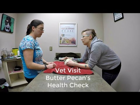 Meet My Vet: Guinea Pig Health Check Appointment
