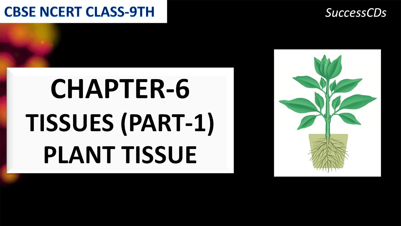 Tissues - Biology Class 9 NCERT Science Plant tissues