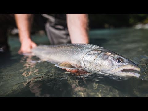 Fishing BC And Hooké Present: The Upper Pitt With Pitt River Lodge