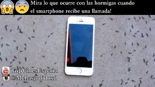 Mira lo que ocurre con las hormigas cuando el smartphone recibe una llamada!