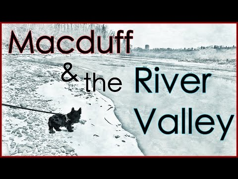 MacDuff The Scottish Terrier Exploring the River Valley