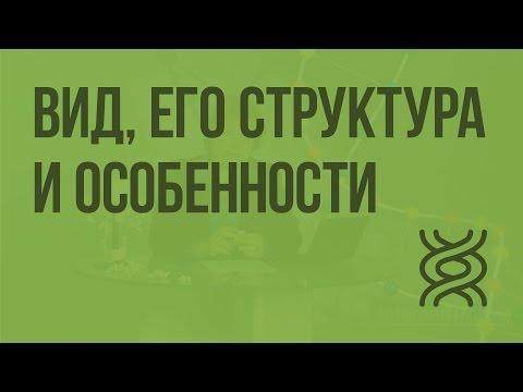 Вид, его структура и особенности thumbnail