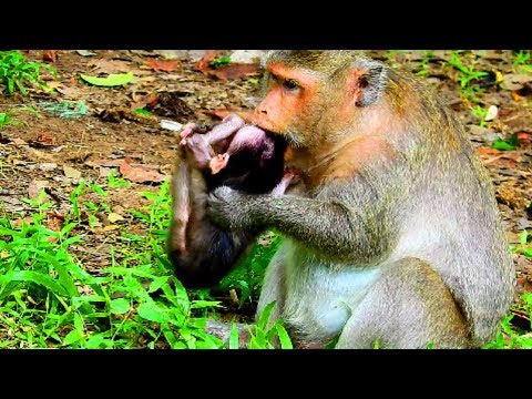 Pity baby! Mum very angry new baby so much, Mum not breast her baby , Baby very hungry #1173