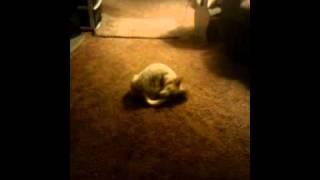 Crazy dog on catnip