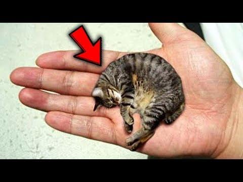 Top 10 Pets YOU WONT BELIEVE EXIST!