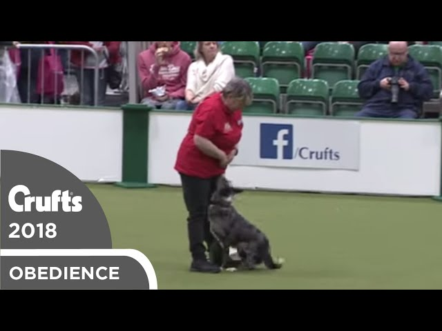 Inter-Regional Rally - Level 4 - Part 4 | Crufts 2018