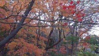 Япония. Момидзи в токийском парке Китаномару(В Японии существует множество обычаев и ритуалов, аналогов которым нет в европейской культуре. Одним из..., 2015-12-14T06:17:32.000Z)
