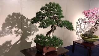 93rd KOKUFU TEN BONSAI EXHIBITION 2019 PART 1  (video 2 / 2)  Tokyo Feb.9~12