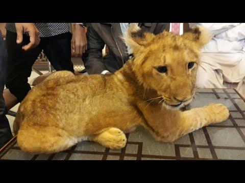 Safari Park Tour - Karachi