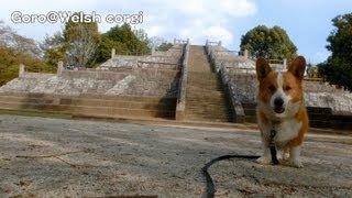 Pyramid / ピラミッド 国営昭和記念公園 20130412 Goro@welsh Corgi