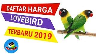 Harga Burung Lovebird Terkini
