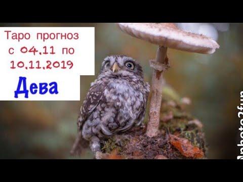 Дева _ таро гороскоп на неделю с 04.11 по 10.11.19 _ общий таро прогноз