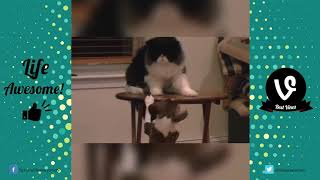 Life Awesome FUNNY CAT & DOG FAILS COMPILATION 2017 Funny Animals Videos 2017