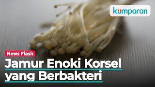 Waspada Bahaya Enoki & Bakteri Listeria.