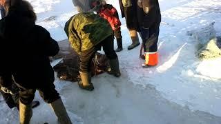 Рыбалка в Якутии на Налима