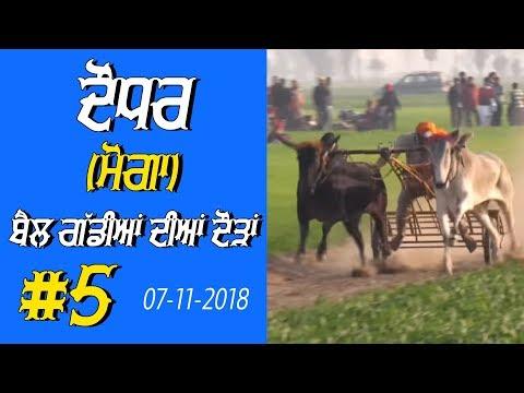 OX RACES #5 🔴 ਬੈਲ ਗੱਡੀਆਂ ਦੀਆਂ ਦੌੜਾਂ बैलों की दौड़ें  بیلوں کی دودن  at DAUDHAR Moga 17 01 2019