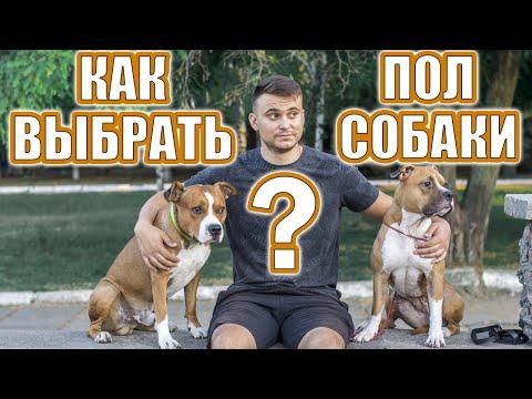 Как выбрать пол собаки || ДРЕССИРОВКА СОБАК ||