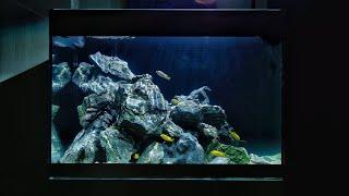 My First Malawi Cichlid Aquascape Youtube