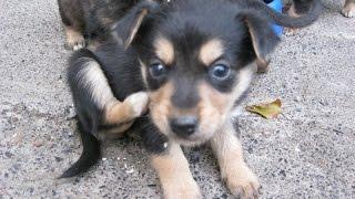 Умилительные щенки-дворняжки